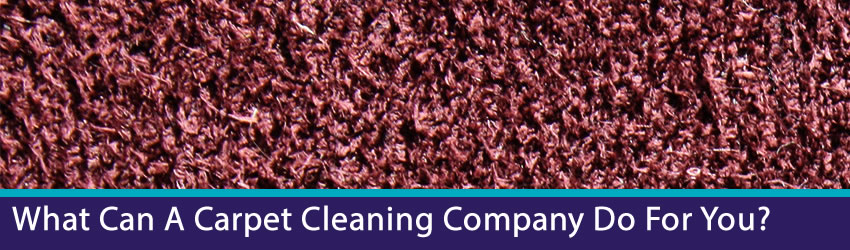 Carpet Cleaning Brisbane Services